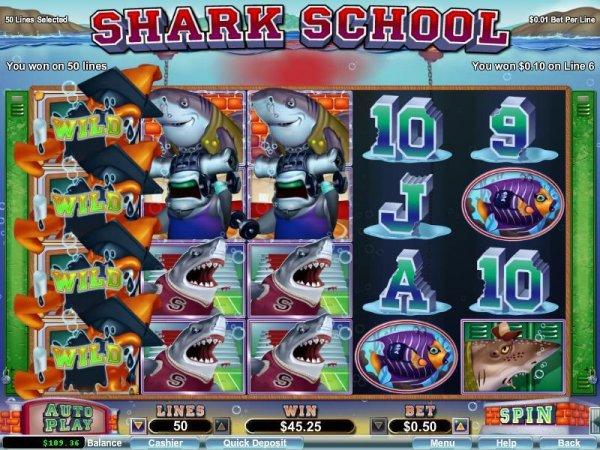 Shark casino paradise beach and casino reviews